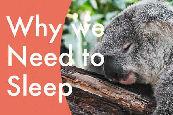 sleep and the science behind it